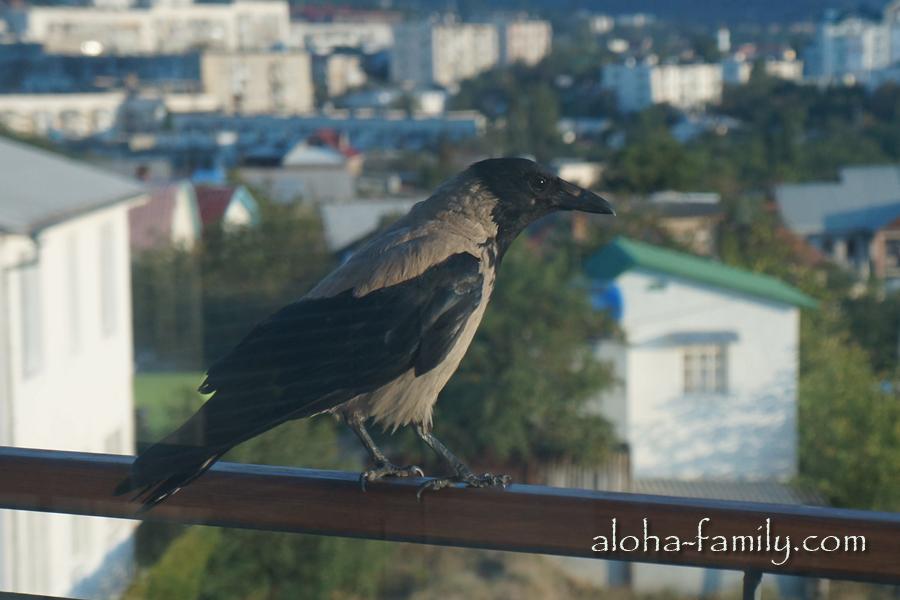 Птица, которая стучала нам в окно