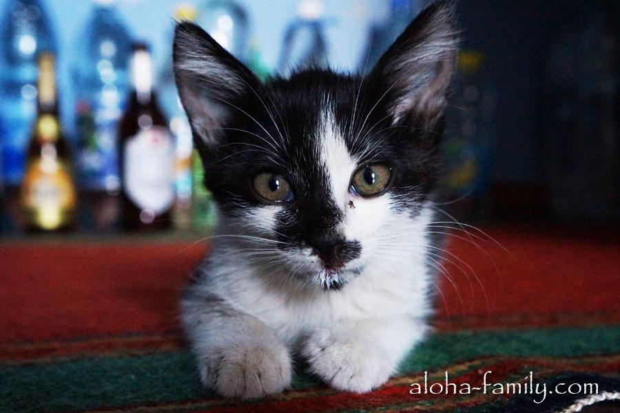 Котик по имени Котик, которого мы приютили у себя на одну ночь