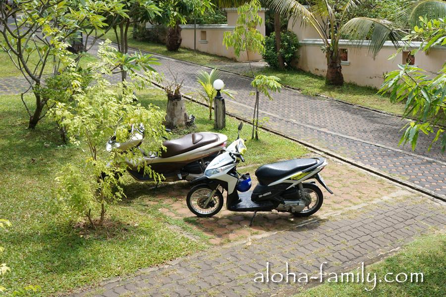 Наш Honda Click и мопед Кости и Ани Honda PCX, который спрятался в кустах (он стеснительный)))
