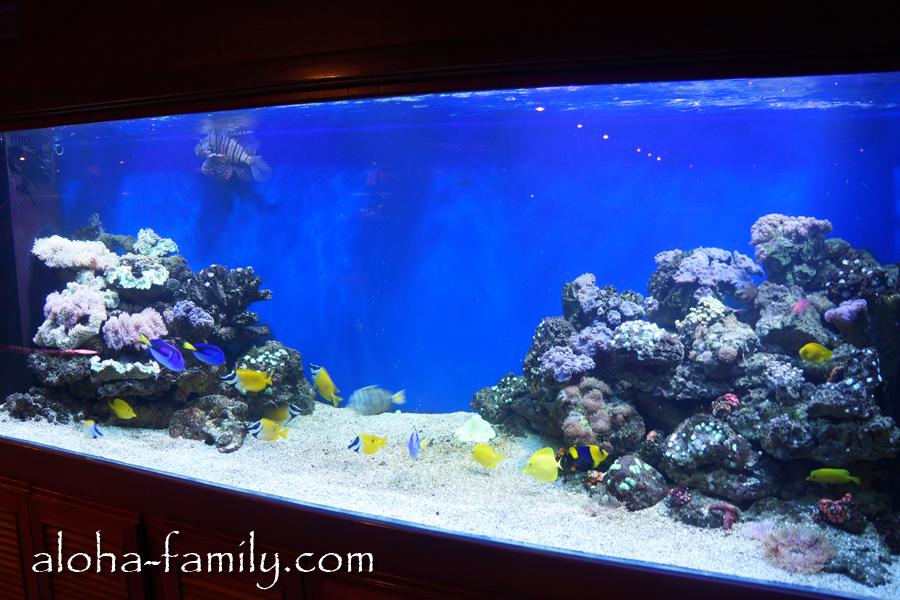 Такие вот прикольные и чистые аквариумы стоят в холле отеля и в ресторане