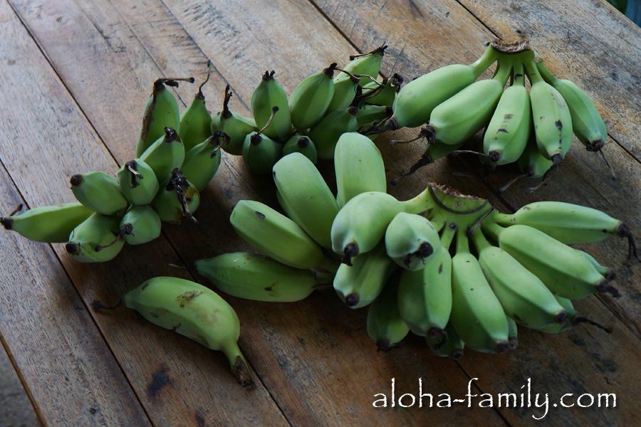 Бесплатные бананы. Made in Samui