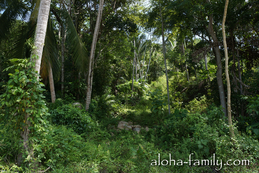 Иногда по сторонам мелькали совсем уж непроходимые чащи джунглей