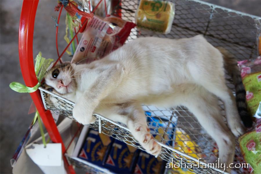 Донсаковский котэ с бантиком второй засветился раз на нашем блоге