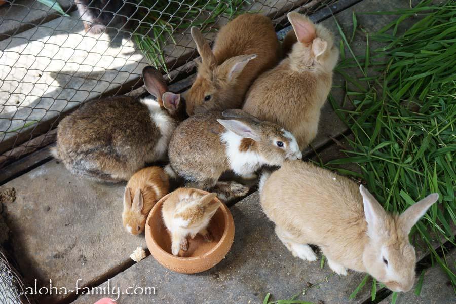 Кролики Парадайз парк Самуи - очень милые создания!