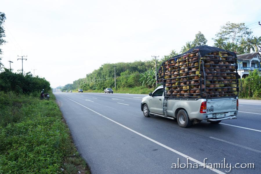 Кто-то везет кокосы пока мы ищем поворот на Донсак