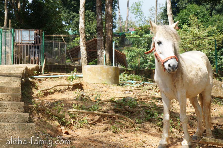 Одинокая маленькая лошадка