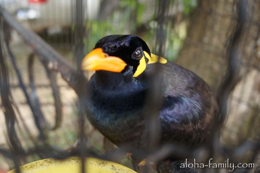 """""""Привет, я русскоязычная птица из Самуи!"""" Кто бы подсказал, что это за зверь!? :)"""
