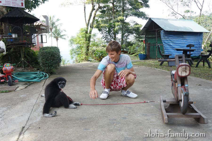 С обезьяной разрешают играться - по идее она должна быть не буйной!