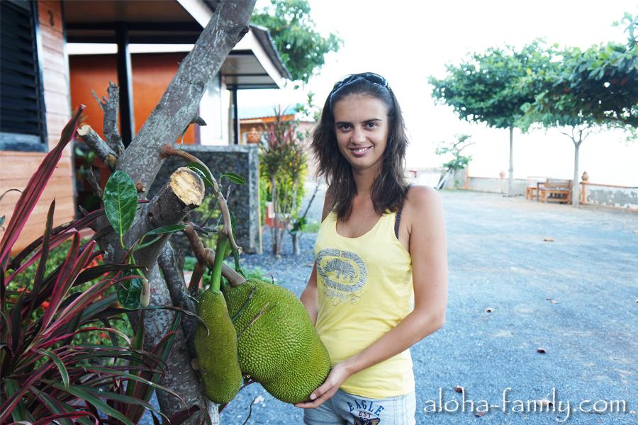 Wanghin Bungalow - возле дома растет джекфрут