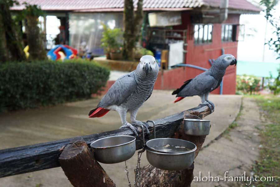 Очень умный попугай жако - нашего друга Сашу такой же попугай преданно ждет в Запорожье)))
