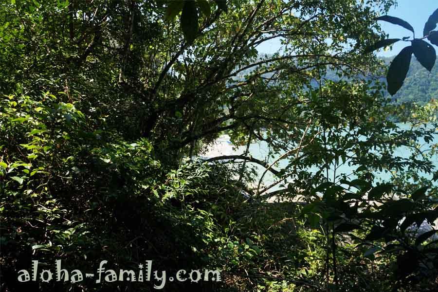 И вот сквозь ветки тропических деревьев начинает виднеться пляж обезьян