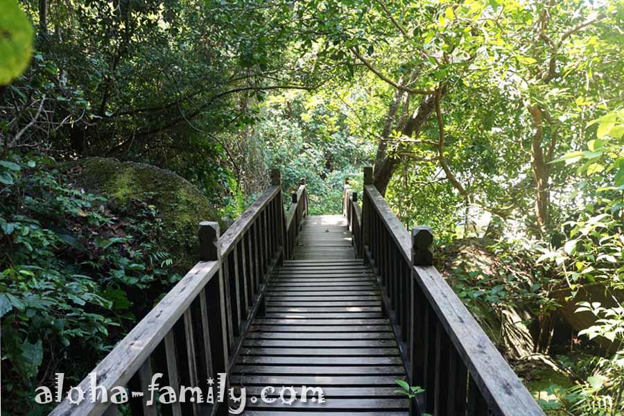 Иногда попадаются очень удобные и ухоженные мосты, особенно как для джунглей