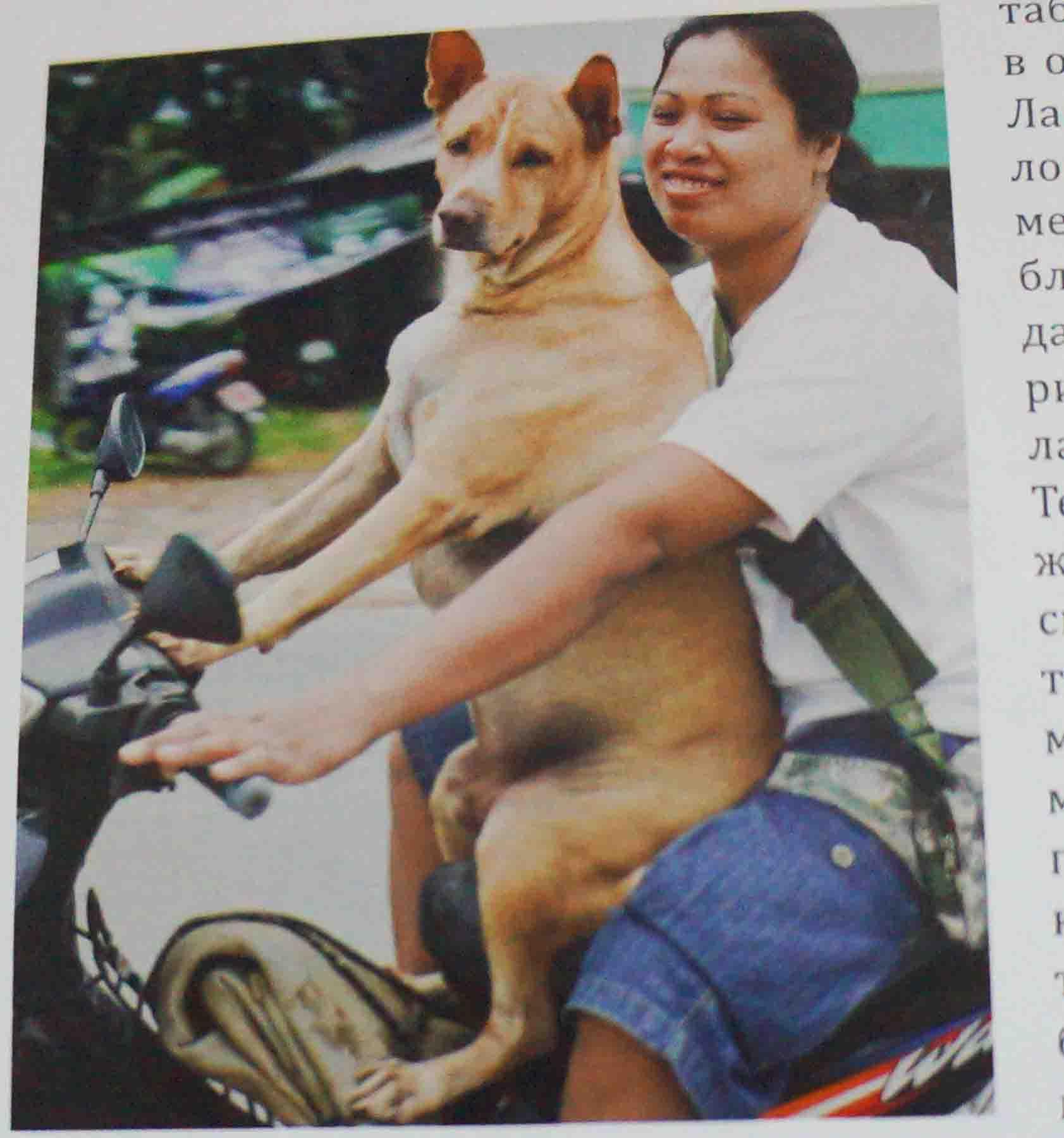 Движение в Таиланде — особенности, советы, ПДД и т.д.