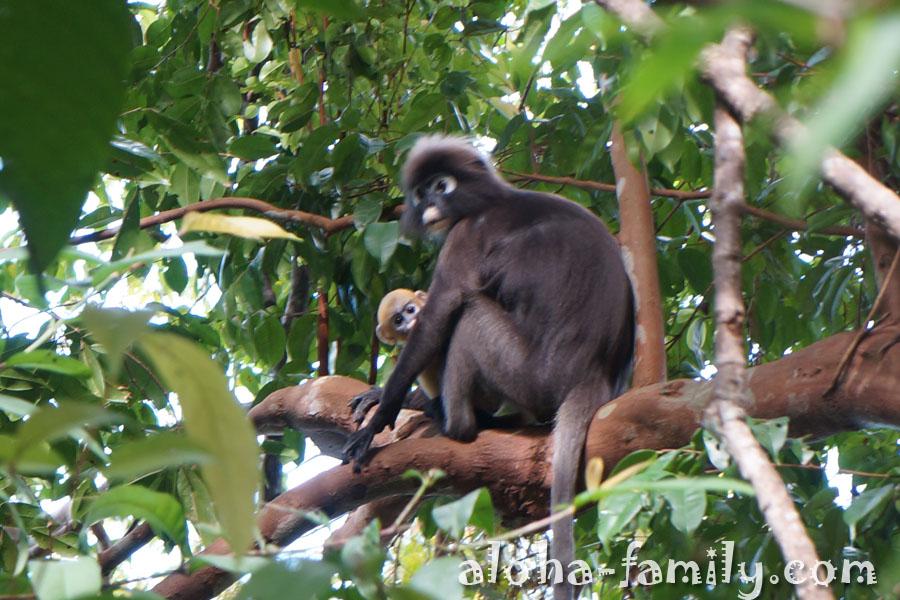 Национальный парк Пенанг в Малайзии
