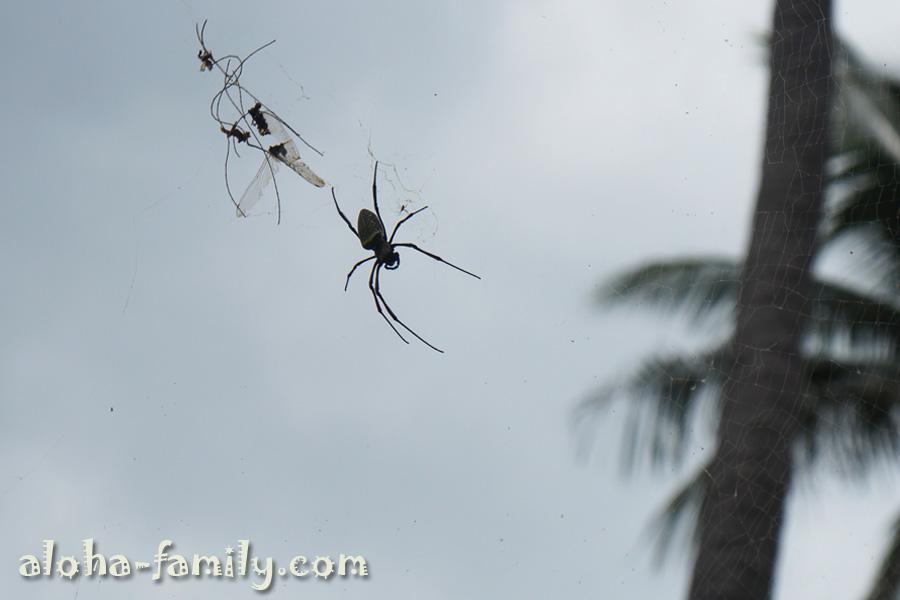 Паук размером с ладонь - вот кто нас действительно удивил! Посмотрите какими маленькими выглядят стрекозы в сравнении с пауком!