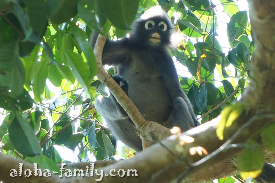 Первая обезьянка, которую мывстретилипо дороге на Monkey Beach