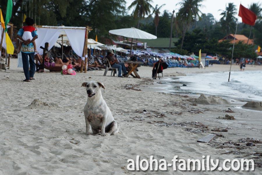 А вот эта бродячая собака пока что еще не совсем круглая, но предпосылки к округлению уже есть)))