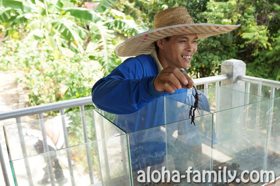 Найти большого скорпиона на Самуи мы смогли только в аквариуме у этого дядьки! ;)