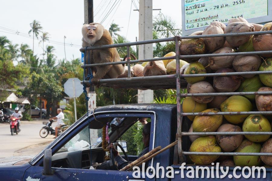 Одна из обезьянок шлет всем нам поцелуй - очень милая, не так ли!? :)))