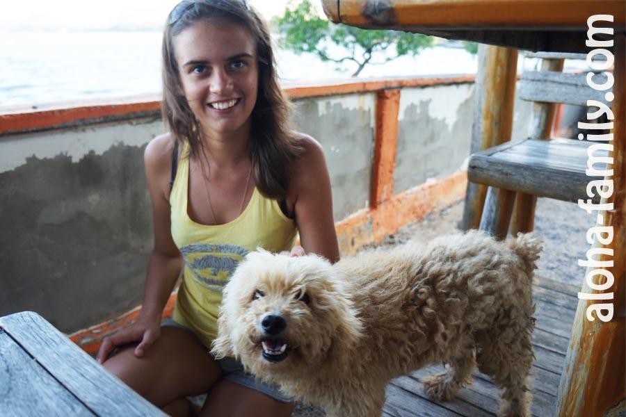 Прикольный пес, который жил в нашем отеле в Донсаке