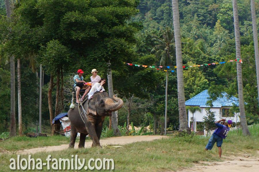 Слон катает туристов и позирует