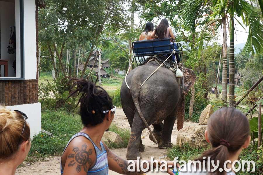 Слон уходит от нас, увозя туристов на прогулку