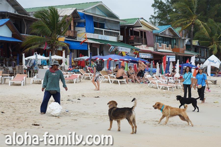 Таец играет с бродячими псами в футбол куском пенопласта