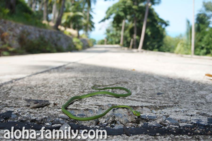 Зелёная змея на Самуи