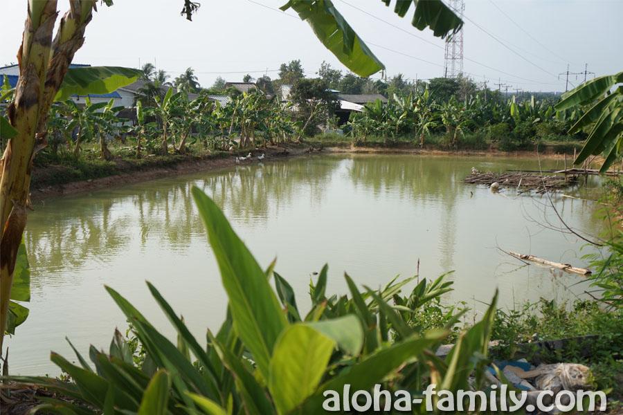 Кафе в тайской деревне с видом на ставок, окруженный банановыми деревьями - Краби, недалеко от Изумрудного озера
