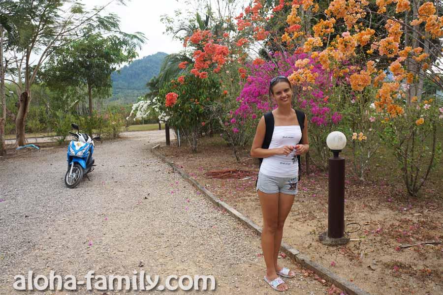 Красивые деревья с цветами возле домов Роберта в Ао Нанге