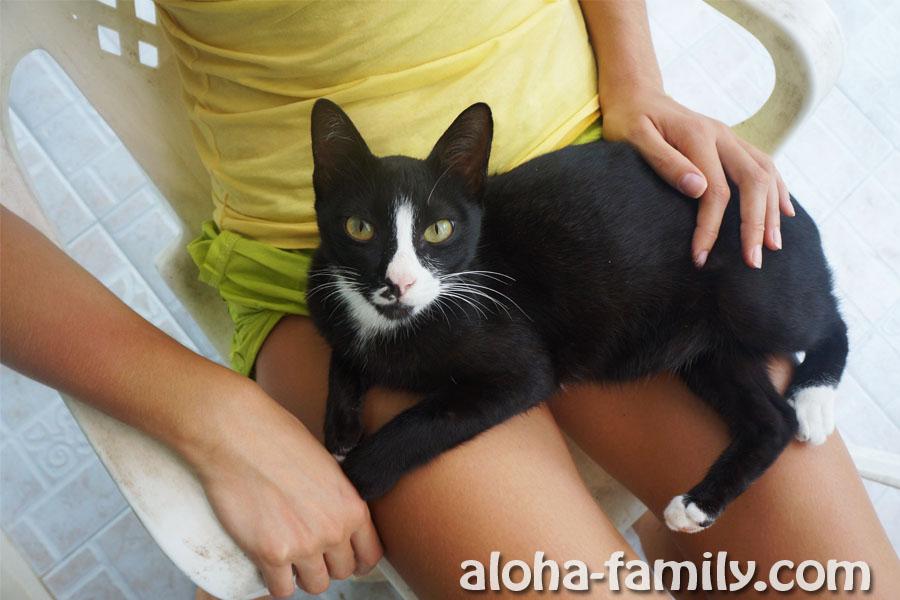Наш кот по кличке Ко Тао (кто не в курсе, есть такой остров недалеко от Самуи) ;-)