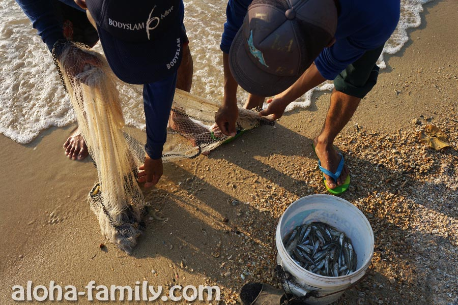Совсем уж незначительная часть улова тайских рыбаков досталась нашему котику - Ко Тао :)))