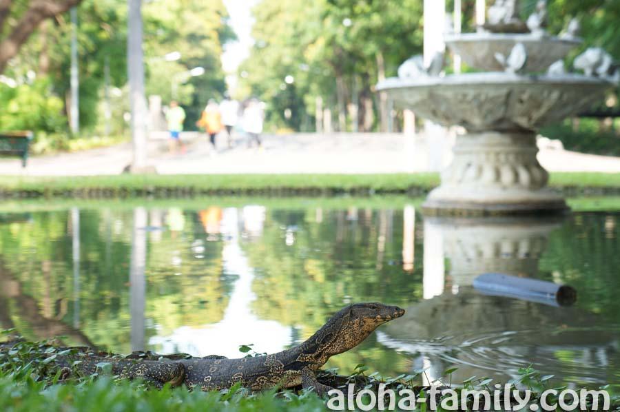 Небольшой метровый варан в парке Люмпини в Бангкоке