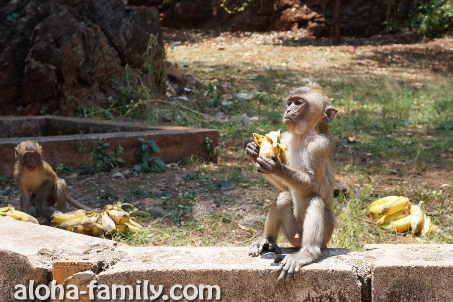 Один из самых удачных кадров с обезьянами возле Tiger Cave - они такие шустрые!)))