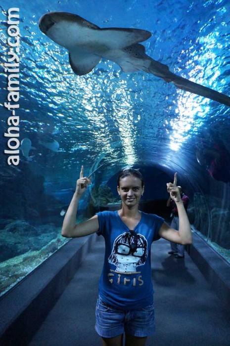 Siam Ocean World - Лена и акула