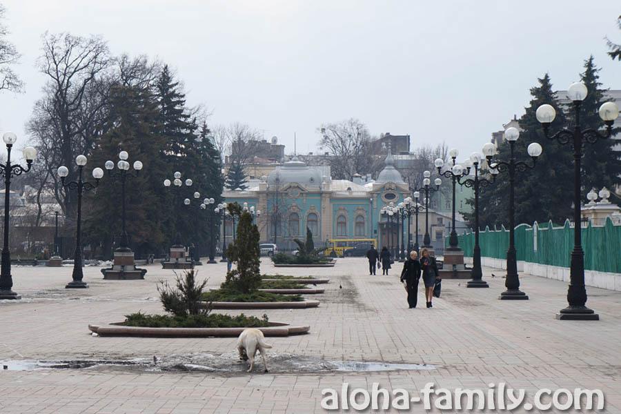 Собака доедает остатки снега возле Мариинского парка))) Вот оно как киевские власти избавились от снега))))