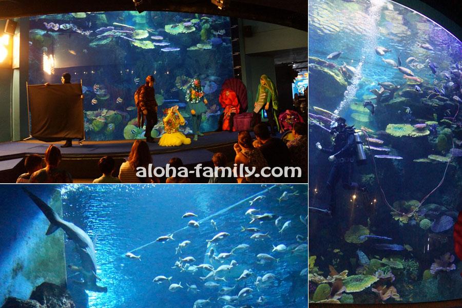 """Кормление рыб - представление в Мире """"Сиам Оушн""""; рыба молот в океанариуме"""