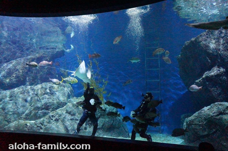 Кормление скатов в Siam Ocean World