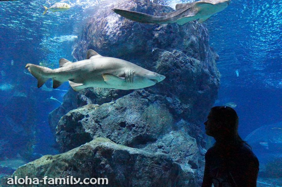 Лена и гигантская акула