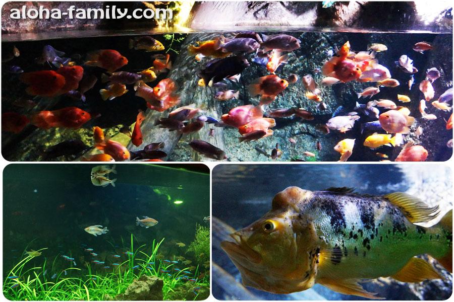 Множество больших и маленьких аквариумов в Siam Ocean World