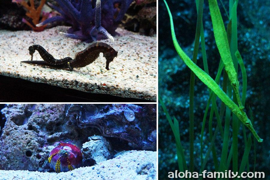 Морские коньки, рыбы, похожие на иглы и шары
