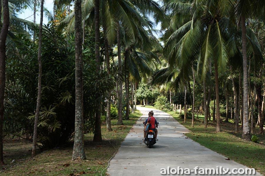 Наши друзья в джунглях между Банг По и Натоном - исследуем местность