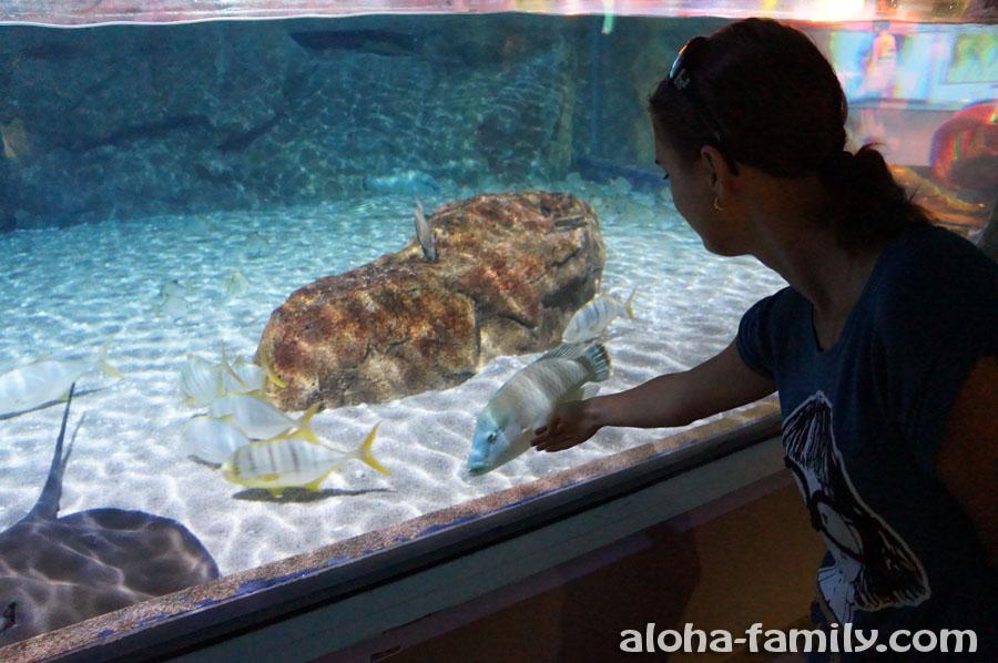 Очень чистые стёкла и красивый аквариум в Бангкоке