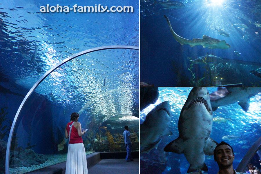 Самый эффектный туннель в Siam Ocean World