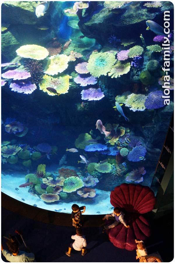 Шестиметровый аквариум в Бангкоке