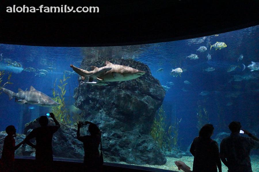 Шикарный зал с акулами со всех сторон