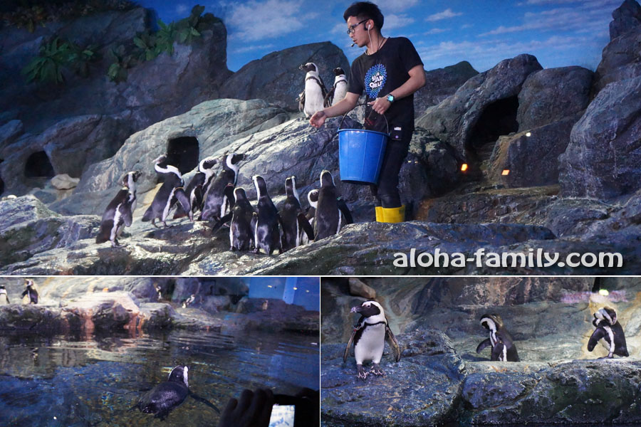 """Шоу """"кормление пингвинов"""" в Бангкокском океанариуме"""