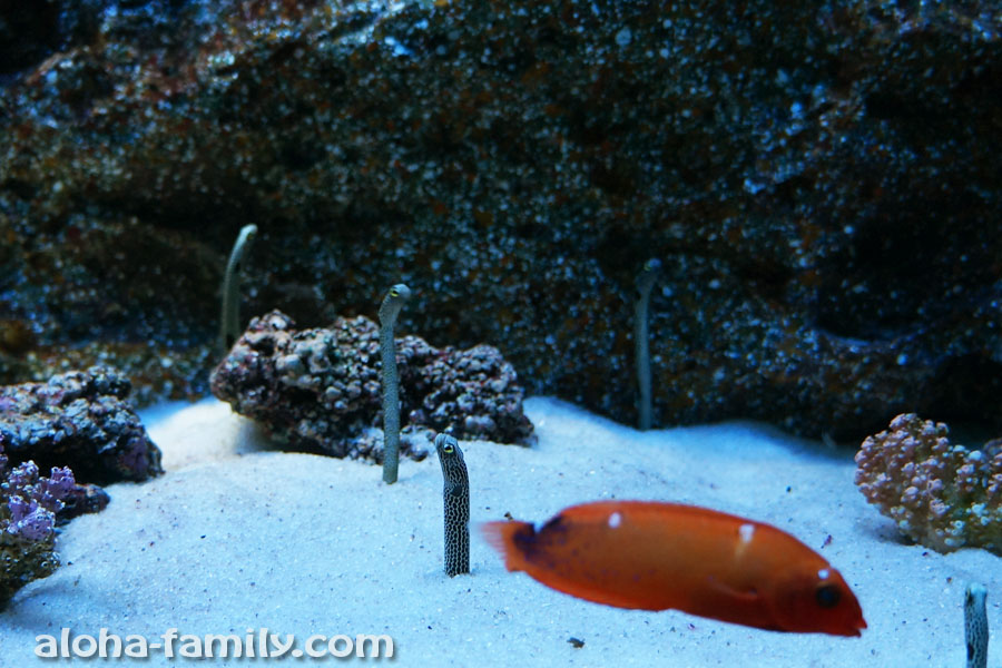 Siam Ocean в БКК - тонкие вертикально плавающие рыбы