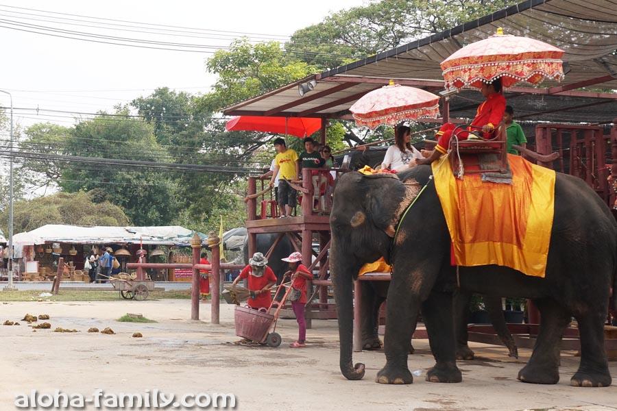 Слонов в Аюттайе очень много! На них катаются тоже в основном китайцы))