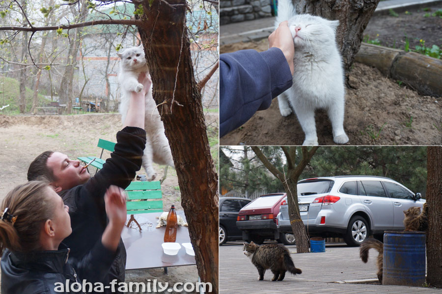 Спасение беременной кошки и фото её ухажеров
